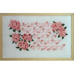 ABC hortensia rose (Fiche)