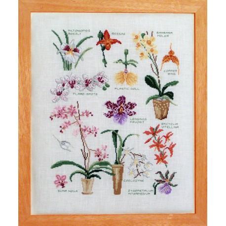Variétés Orchidées (Fiche)
