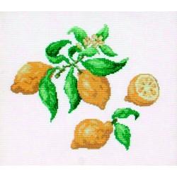 Citrons (Fiche)