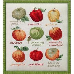 Race de pommes (Fiche)