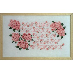 ABC hortensia rose (Kit)