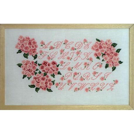 ABC hortensia rose (Kit)