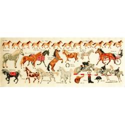 Equitation (Kit)